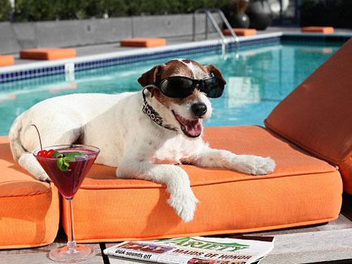 Chết hơn 5 năm, chó Uggie vẫn thắng giải thưởng diễn xuất - Ảnh 2.