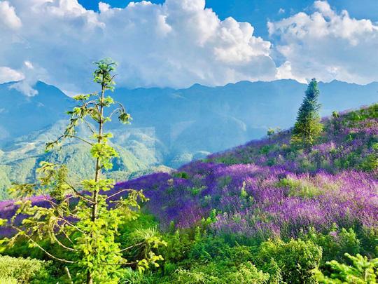 Check in đồi hoa tím, chụp những bức ảnh đẹp để đời - Ảnh 1.