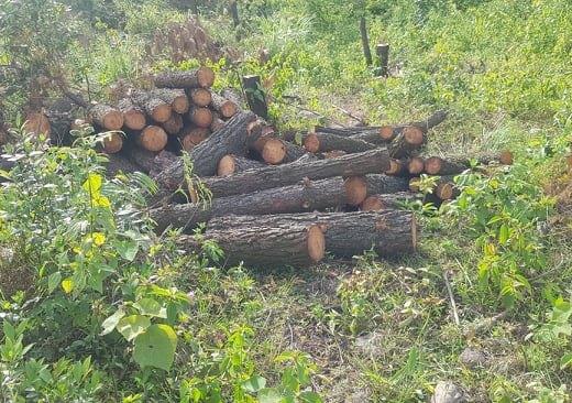 Vụ hơn 4 ha rừng phòng hộ cách trụ sở UBND xã 1 km bị chặt phá: Công an vào cuộc điều tra - Ảnh 1.