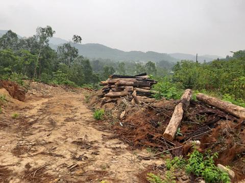 Clip, ảnh cận cảnh hơn 4 ha rừng phòng hộ bị chặt phá tan hoang cách UBND xã 1 km - Ảnh 11.