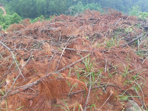 Clip, ảnh cận cảnh hơn 4 ha rừng phòng hộ bị chặt phá tan hoang cách UBND xã 1 km - Ảnh 9.