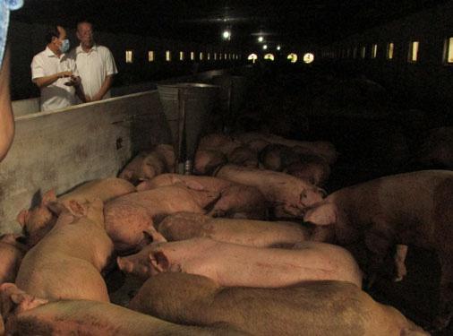 TP HCM sắp có thịt heo Thái Lan - Ảnh 1.
