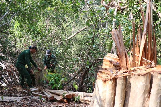 Hàng vạn hecta rừng bị xóa sổ - Ảnh 1.