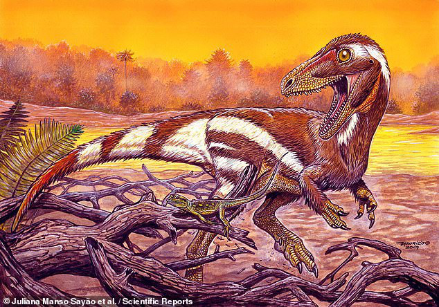 Khai thác đá, đụng độ tổ tiên quái thú không cánh và hung ác của loài chim - Ảnh 1.