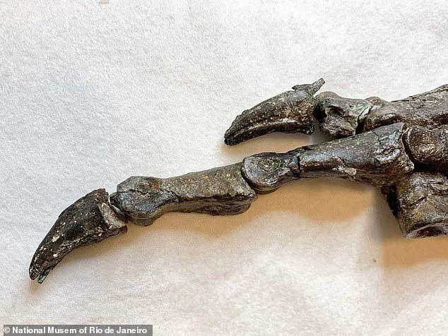 Khai thác đá, đụng độ tổ tiên quái thú không cánh và hung ác của loài chim - Ảnh 2.