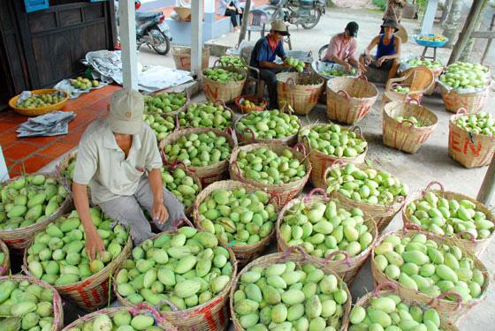 Lời cảnh tỉnh cho trái cây xuất khẩu - Ảnh 1.