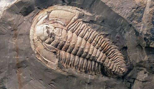 Hãi hùng vật thể ngoài hành tinh đã giết chết 50% loài trên Trái Đất - Ảnh 2.