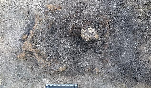 Bí ẩn hài cốt không phải con người nằm lẫn trong khu mộ cổ 8.400 năm - Ảnh 1.