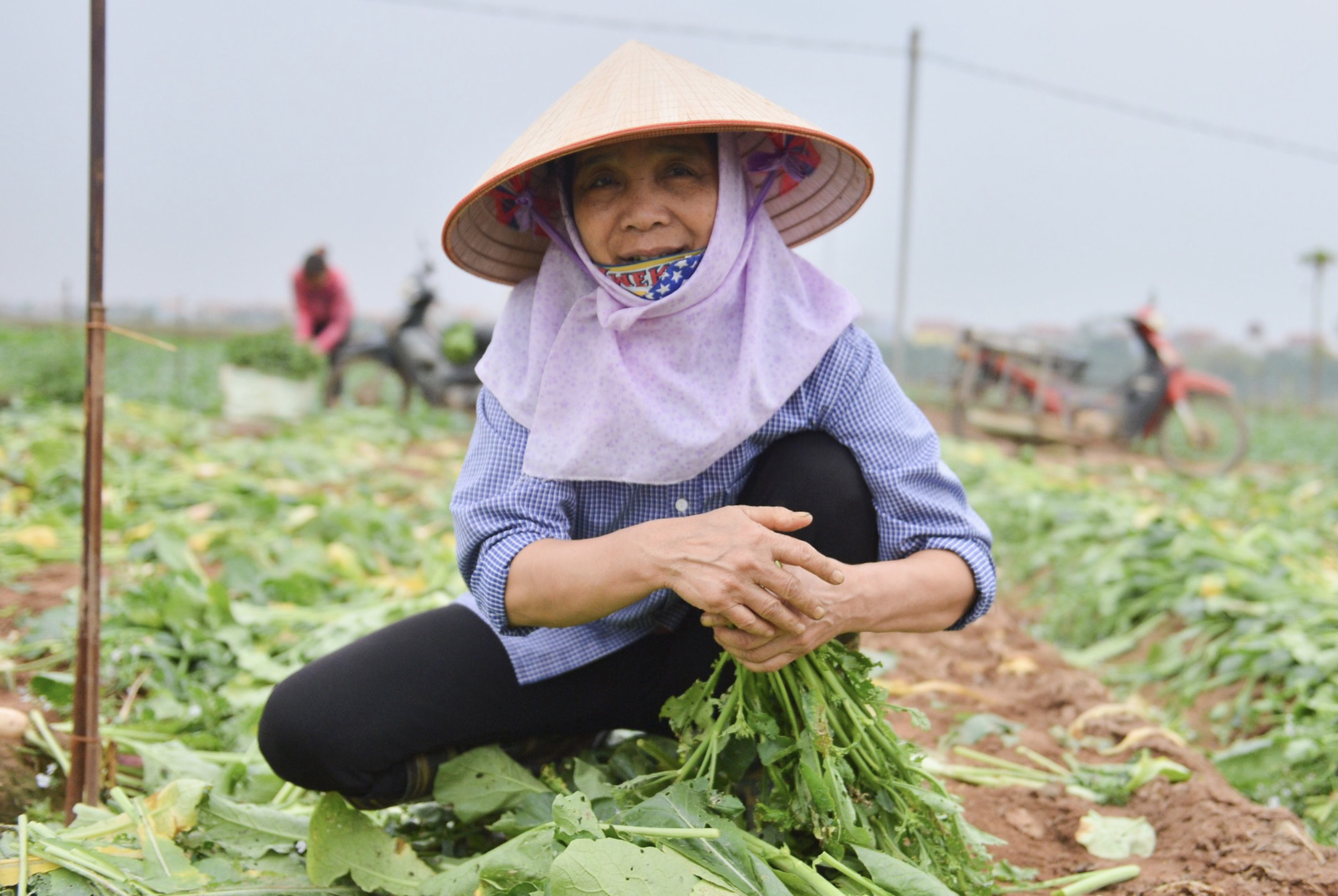 Close-up of Hanoi people removing hundreds of tons of radishes because they cannot sell them - Photo 2.