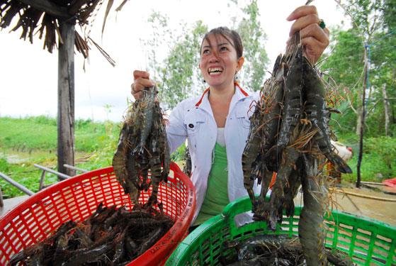 Gỡ thế khó cho tôm Việt
