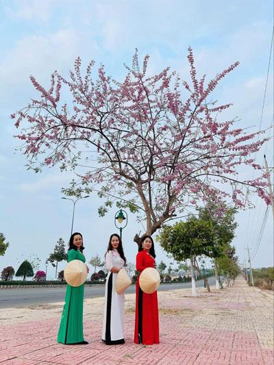 Hoa đỗ mai nở rực trên cung đường đẹp nhất Mũi Né - Ảnh 1.