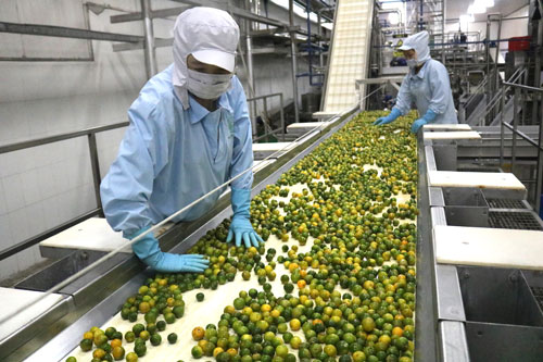 Chế biến sâu để tăng giá trị cho nông sản Việt - Ảnh 1.