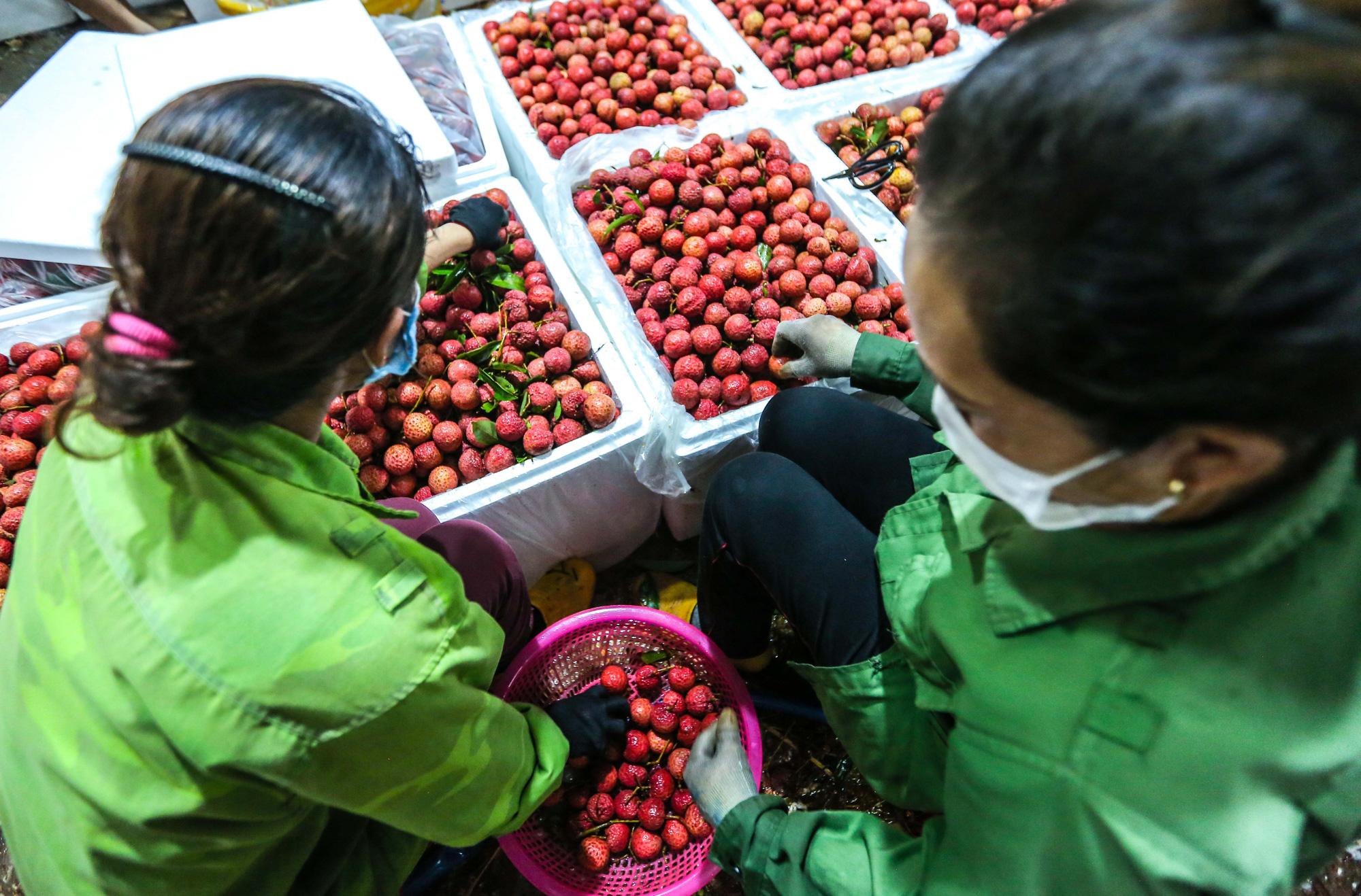 CLIP: Xuyên đêm đóng gói vải đưa sang Trung Quốc tiêu thụ - Ảnh 9.