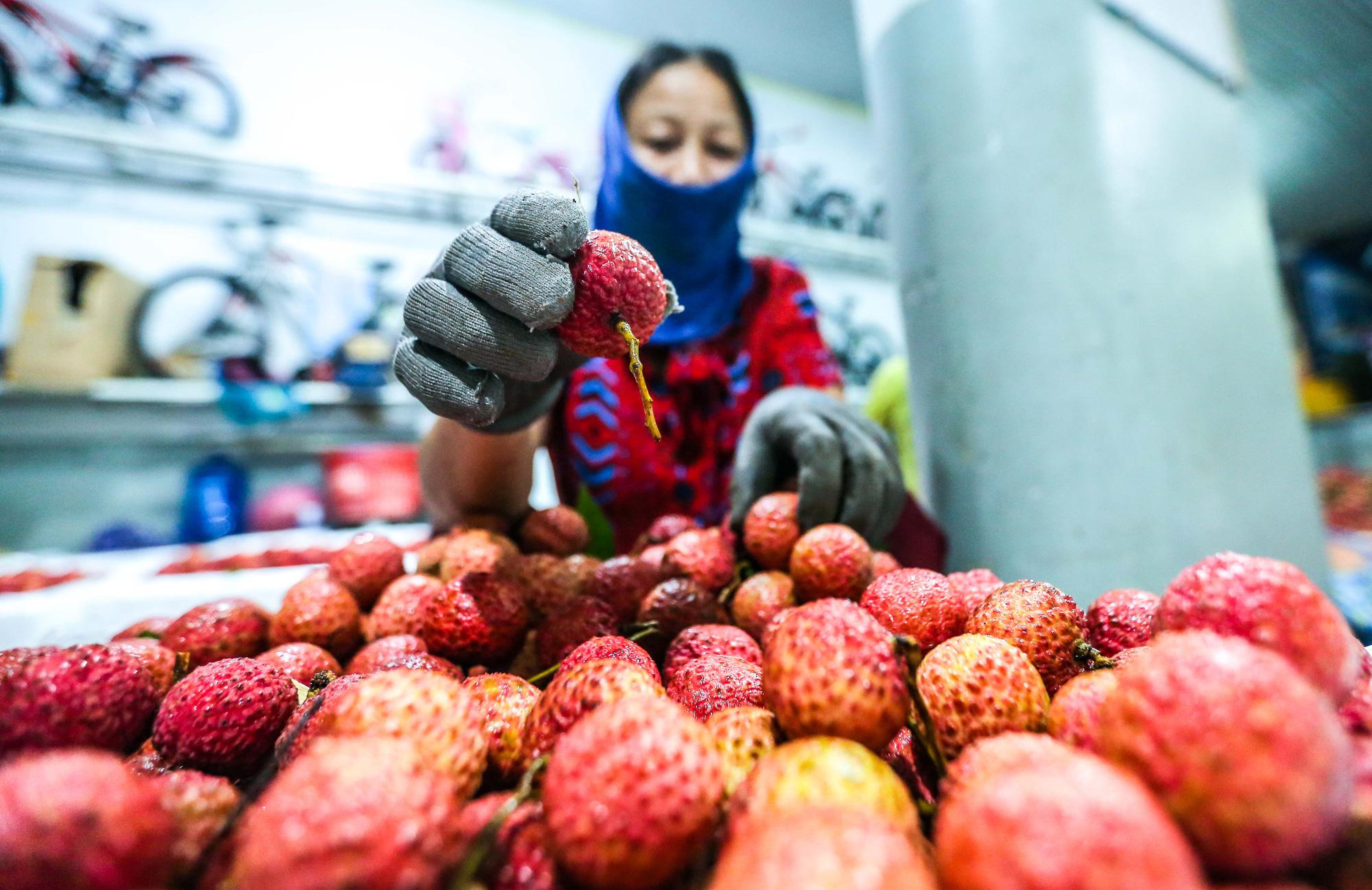 CLIP: Xuyên đêm đóng gói vải đưa sang Trung Quốc tiêu thụ - Ảnh 10.