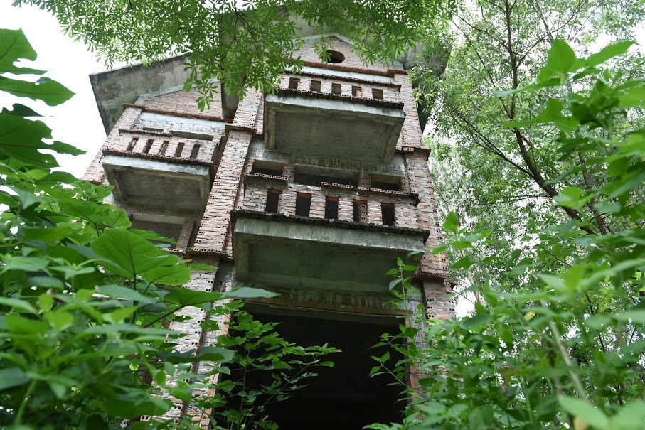 CLIP: A series of abandoned villas, urban areas in Hanoi become a place to graze cows - Photo 11.