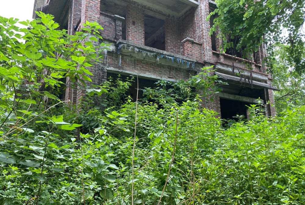CLIP: A series of abandoned villas, urban areas in Hanoi become a place to graze cows - Photo 6.