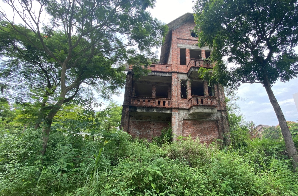 CLIP: A series of abandoned villas, urban areas in Hanoi become a place to graze cows - Photo 4.