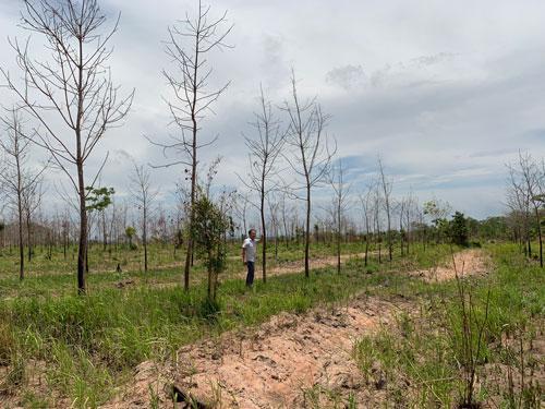 Bảo vệ rừng bị truy tố vì để rừng bị hủy hoại - Ảnh 1.