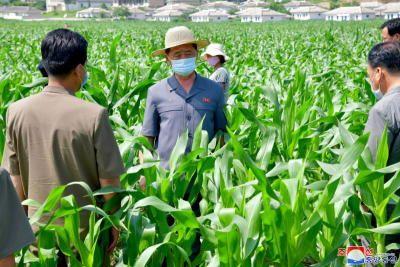 Triều Tiên thừa nhận thiếu lương thực trầm trọng - Ảnh 1.