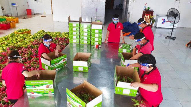 Bước tiến dài của trái cây xuất khẩu - Báo Người lao động