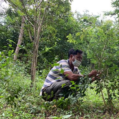 Nỗ lực khôi phục rừng trắc - Ảnh 2.