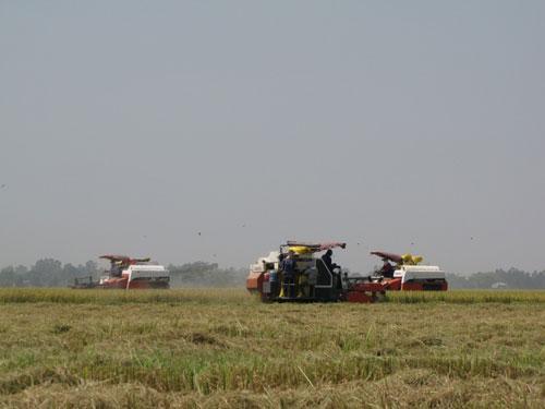 Các tỉnh giúp nhau thu hoạch lúa - Ảnh 1.