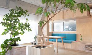 Căn nhà dành riêng cầu thang cho cây xanh - Ảnh 5.