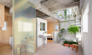 Căn nhà dành riêng cầu thang cho cây xanh - Ảnh 10.