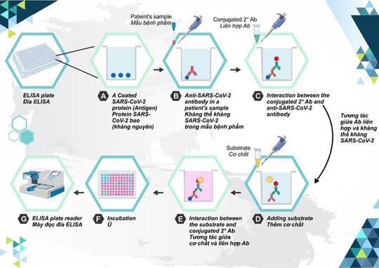 Cấp phép nhập khẩu 30 triệu liều vắc-xin Covid-19 Hayat-Vax - Ảnh 3.