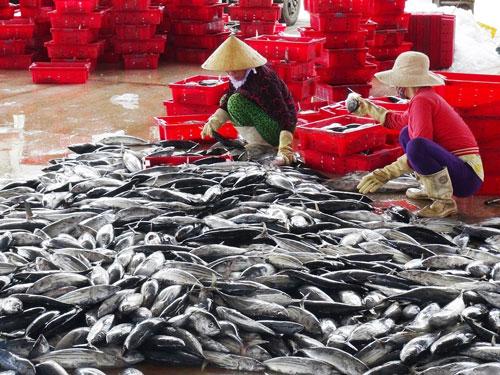 Tìm giải pháp tiêu thụ nông sản - Ảnh 1.