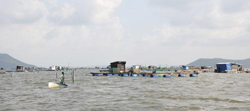 Hàng trăm bè nuôi, hàng ngàn lồng hải sản trên vịnh Xuân Đài