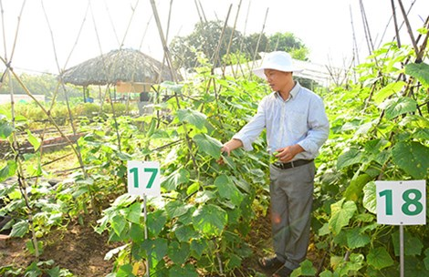Trồng rau quả hữu cơ theo tiêu chuẩn Mỹ, EU tại trang trại rau nhiệt đới Organica. Ảnh: quang huy