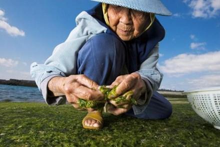 """Nước Nhật đã phải chiến đấu chống lại sự """"xâm lăng"""" trên thị trường thực phẩm."""