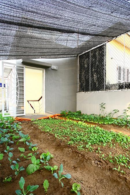 Vườn rau này đủ cung cấp rau sạch ăn cho gia đình. Đây cũng là không gian thư giãn và kết nối các thành viên trong gia đình trong công việc làm vườn.