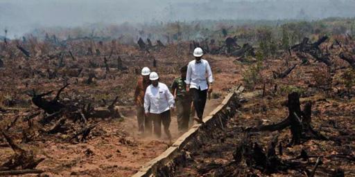 Tổng thống Indonesia Joko Widodo cùng các quan chức thị sát hoạt động xử lý đám cháy.  Ảnh: Kompas.com