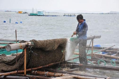 """Ngư dân """"cảo"""" (trục vớt) lưới lên để làm vệ sinh, chuẩn bị vụ thả nuôi mới"""