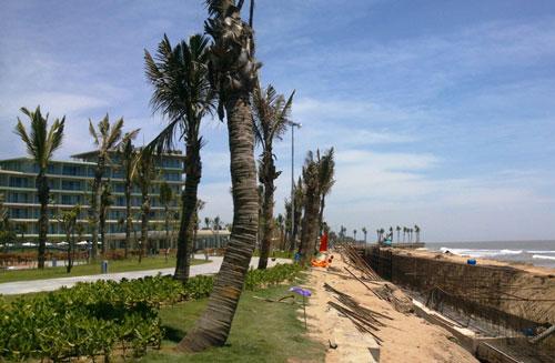 Khu rừng phòng hộ giáp biển đã bị dọn sạch, thay vào đó là những hàng dừa trụi lá