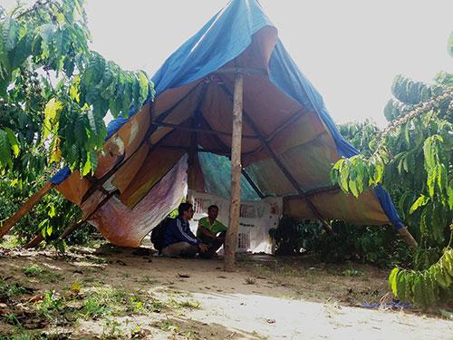 Người dân Tây Nguyên lập lều canh trộm tại rẫy cà phêẢnh: HOÀNG THANH