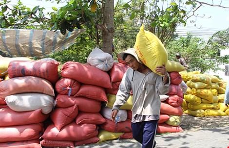 Dù muộn nhưng vẫn còn kịp để gạo Việt thay đổi thứ hạng bằng chất lượng và thương hiệu. Trong ảnh: Nông dân miền Tây thu hoạch lúa. Ảnh: QUANG HUY