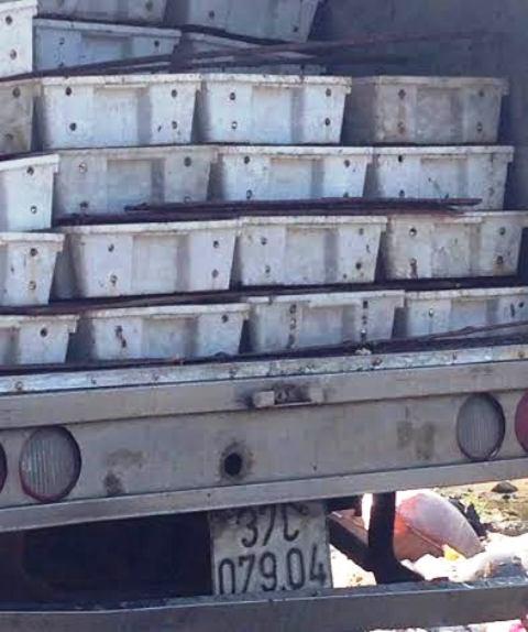 Hơn 3 tấn cá đang phân hủy suýt được đưa đi làm nước mắm