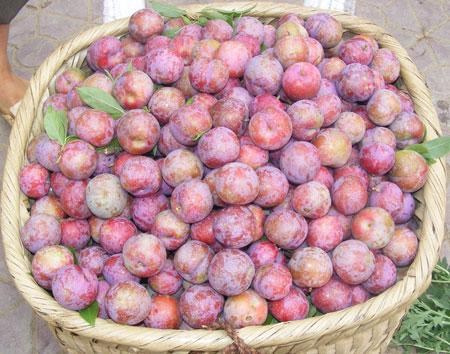 Mận hậu, mận tam hoa đặc sản chỉ có ở Việt Nam