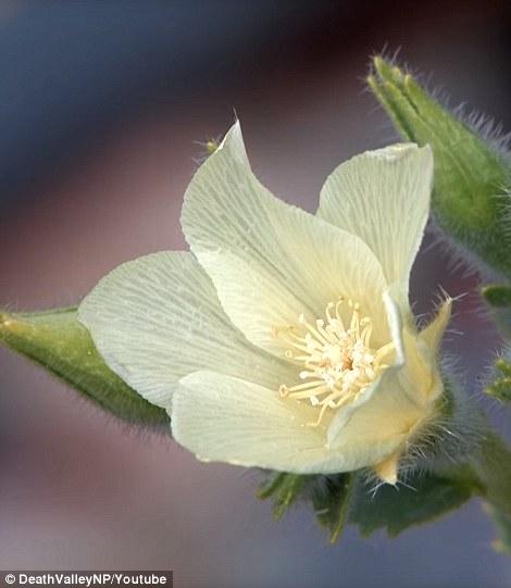 Hoa trắng...