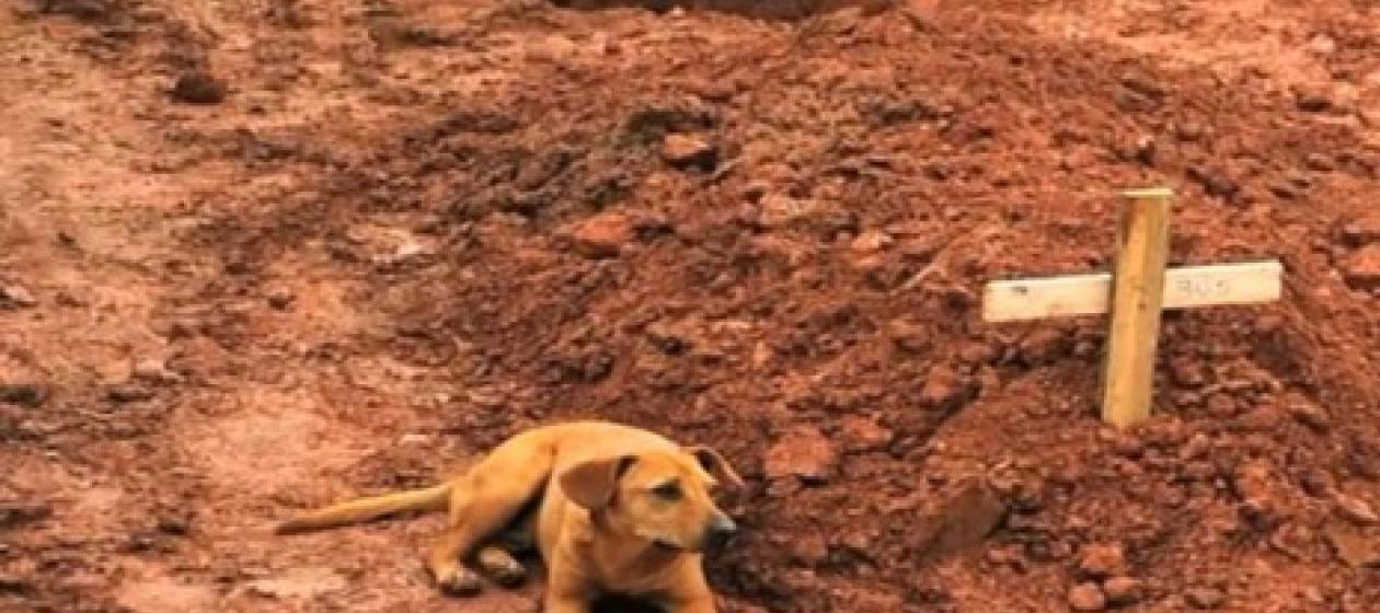 Chú chó tên Leao này ngồi cạnh mộ người chủ đã mất trong trận lở đất ở Brazil hồi tháng 1-2011. Ảnh: YouTube