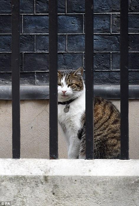 Mèo Larry. Ảnh: PA