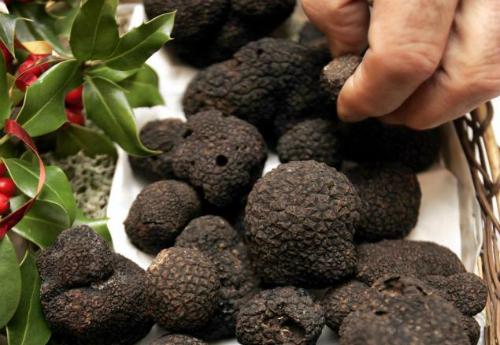 Danh tiếng của nấm truffles đã được biết đến từ thời Hy Lạp cổ đại và La Mã. Ảnh: nydailynews