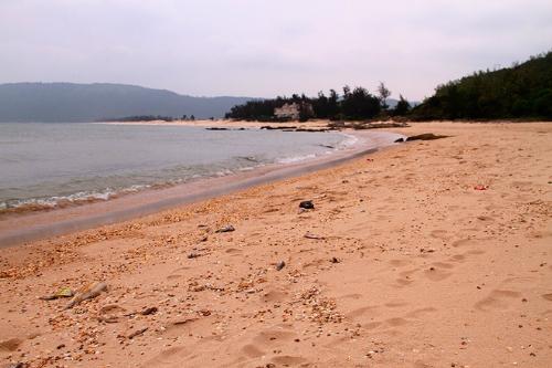 Cá chết dạt vào bờ biển Hà Tĩnh. Ảnh: Đức Hùng