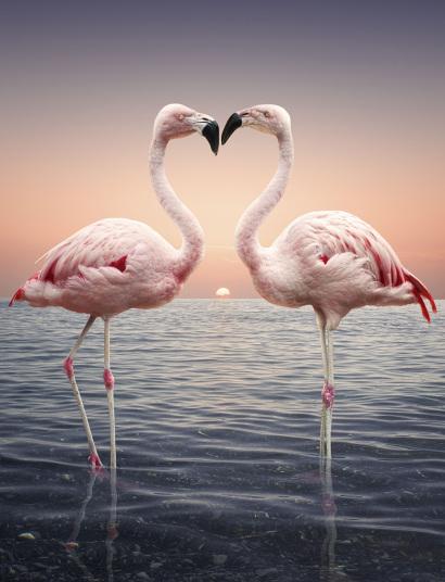 Khó có cảnh tượng nào sánh được tình yêu tuyệt đẹp của cặp đôi hồng hạc yêu kiều này. Ảnh: Cultura/REX/Shutterstock