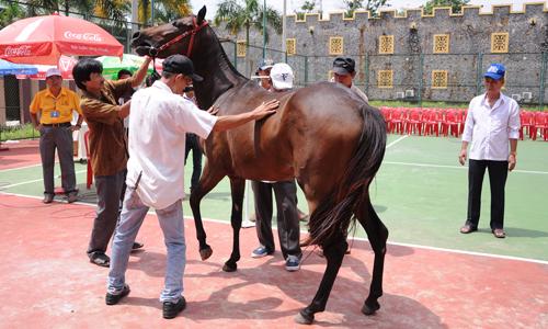 Hiện Đại Nam đã đưa về nhiều giống ngựa quý để dưỡng chuẩn bị phục vụ tại trường đua Đại Nam.