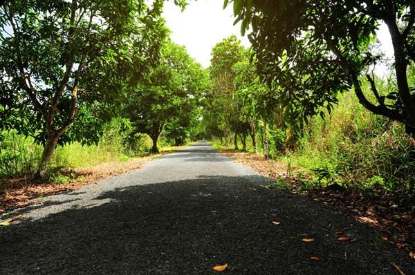 Con đường trải nhựa thẳng tắp dẫn du khách đi hết khu vực Vườn Quốc gia. Đến nơi đây tôi cảm thấy U Minh Hạ vẫn còn rất hoang sơ, dịch vụ du lịch chưa phát triển