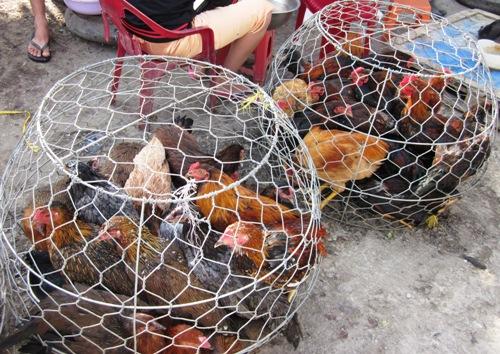 Giá mặt hàng thịt gà tăng mạnh từ 30.000-40.000 đồng một kg. Ảnh: PV